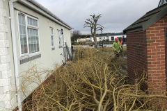 Canvey Tree Pollarding (11)