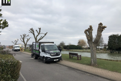 Canvey Tree Pollarding (2)