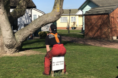 Canvey Tree Pollarding 2 (4)