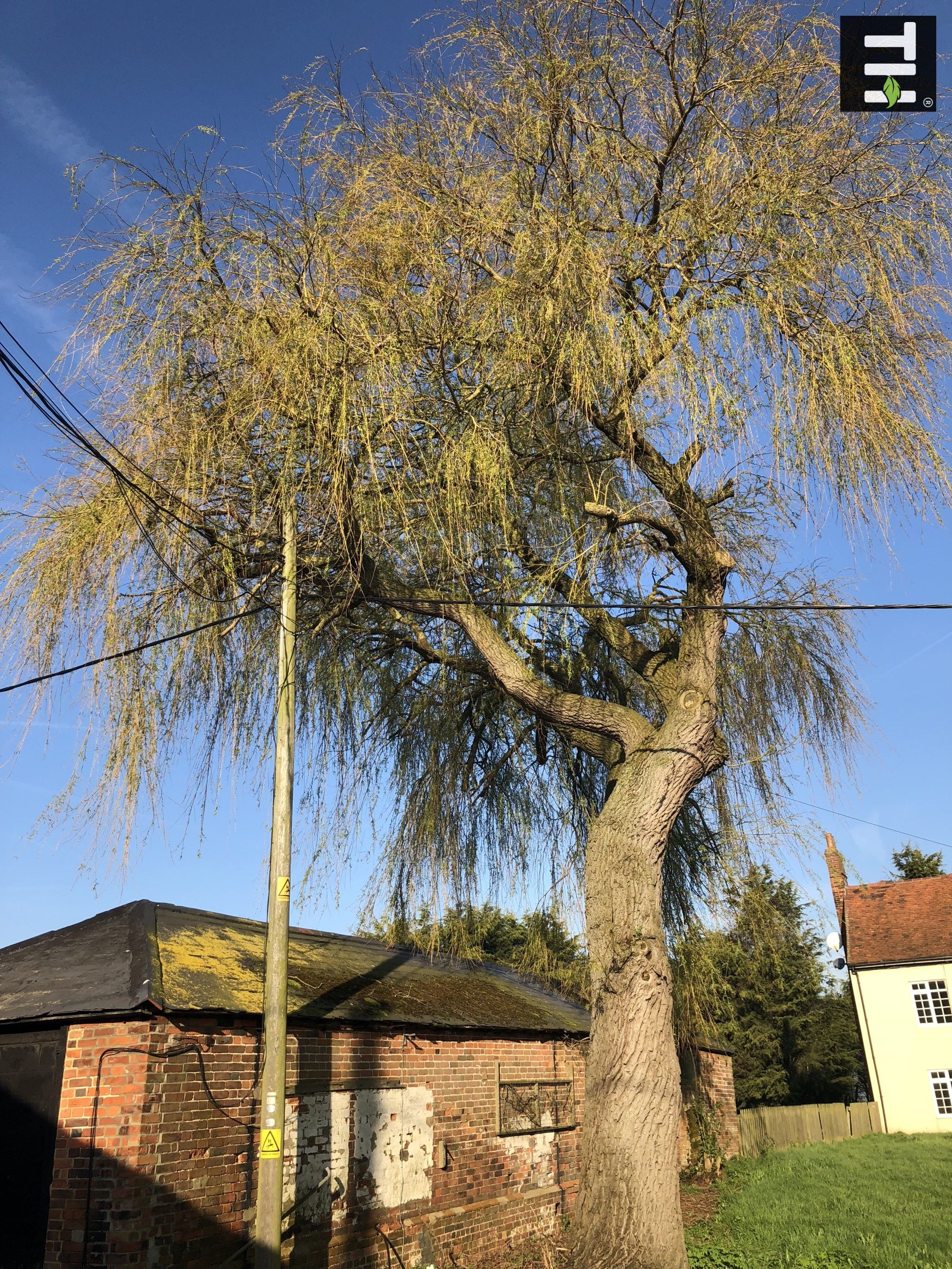 Expert Tree Surgeon In Essex (1)