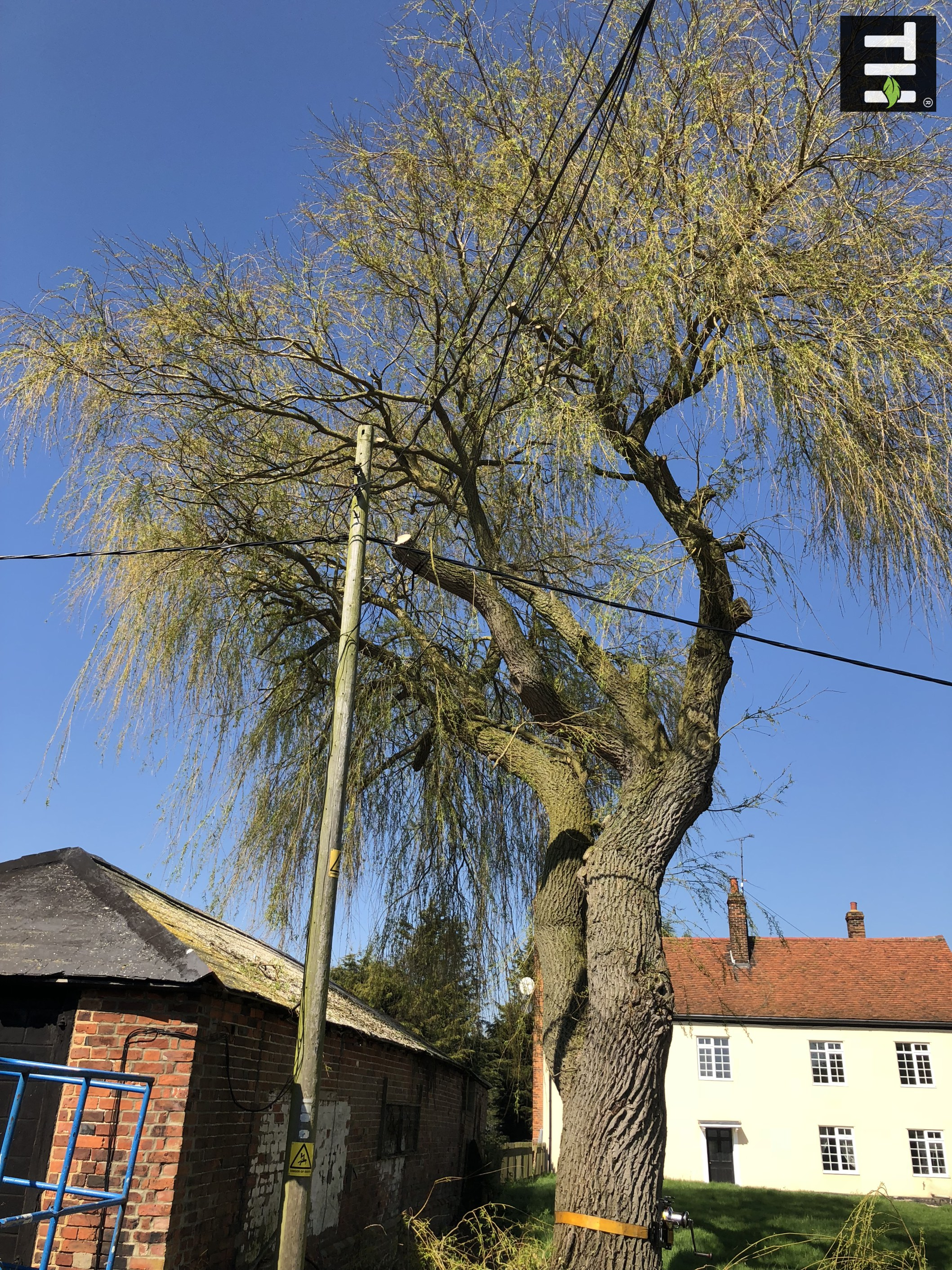 Expert Tree Surgeon In Essex (11)