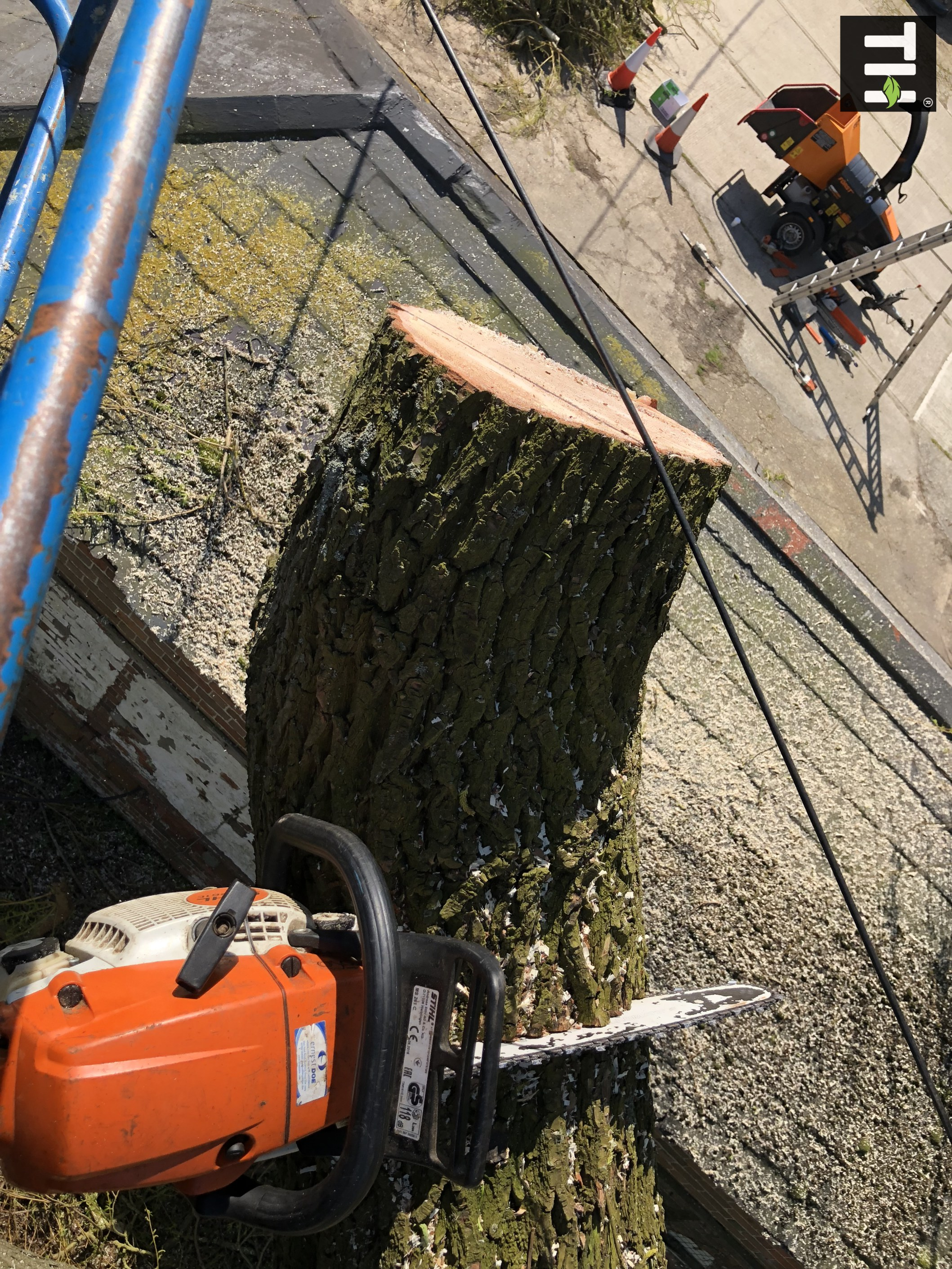 Expert Tree Surgeon In Essex (14)