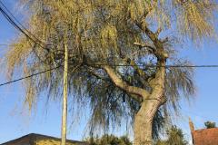 Expert Tree Surgeon In Essex (1)