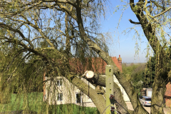 Expert Tree Surgeon In Essex (10)