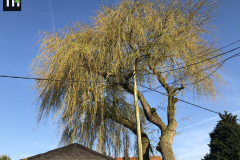Expert Tree Surgeon In Essex (2)