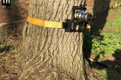 Expert Tree Surgeon In Essex (4)