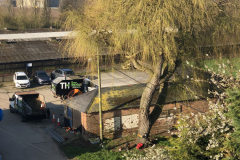 Expert Tree Surgeon In Essex (7)