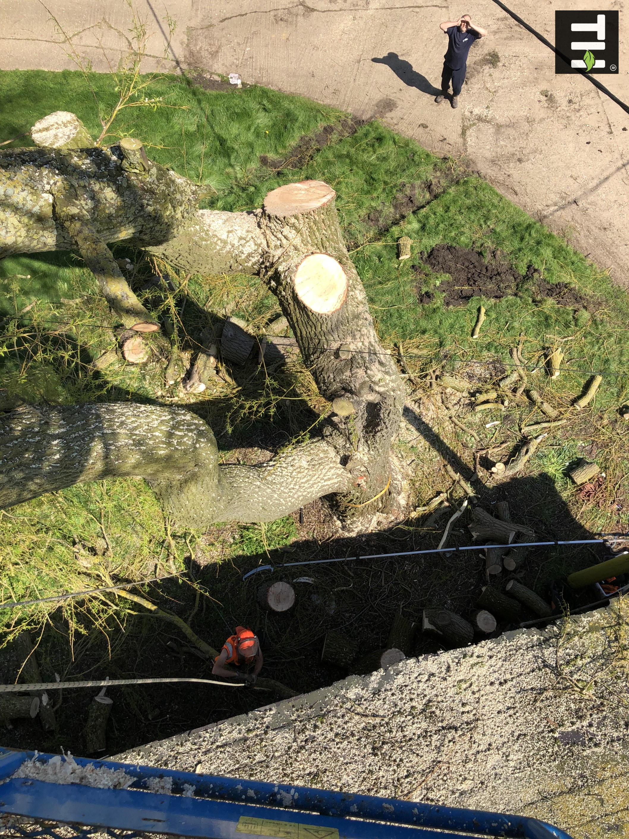 Expert Tree Surgeon In Essex (22)