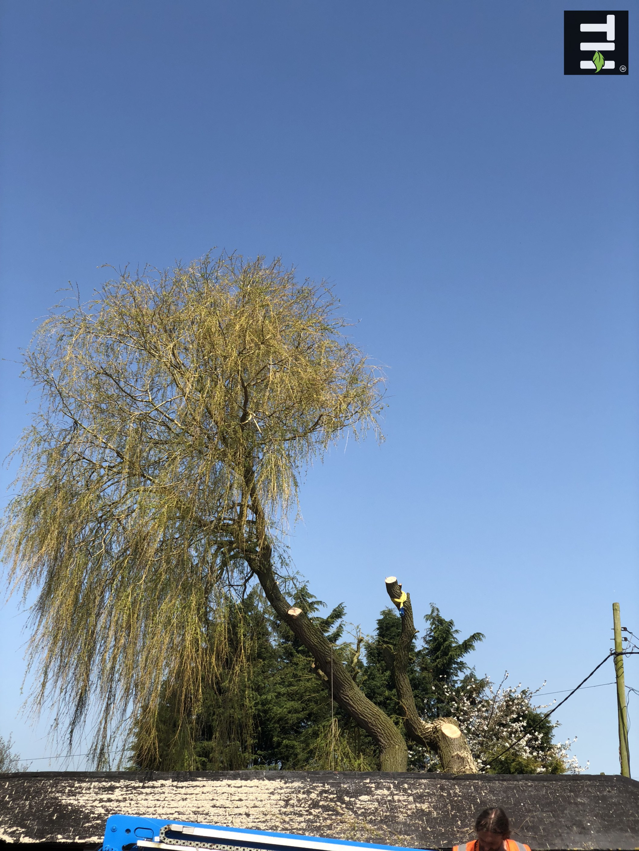 Expert Tree Surgeon In Essex (25)