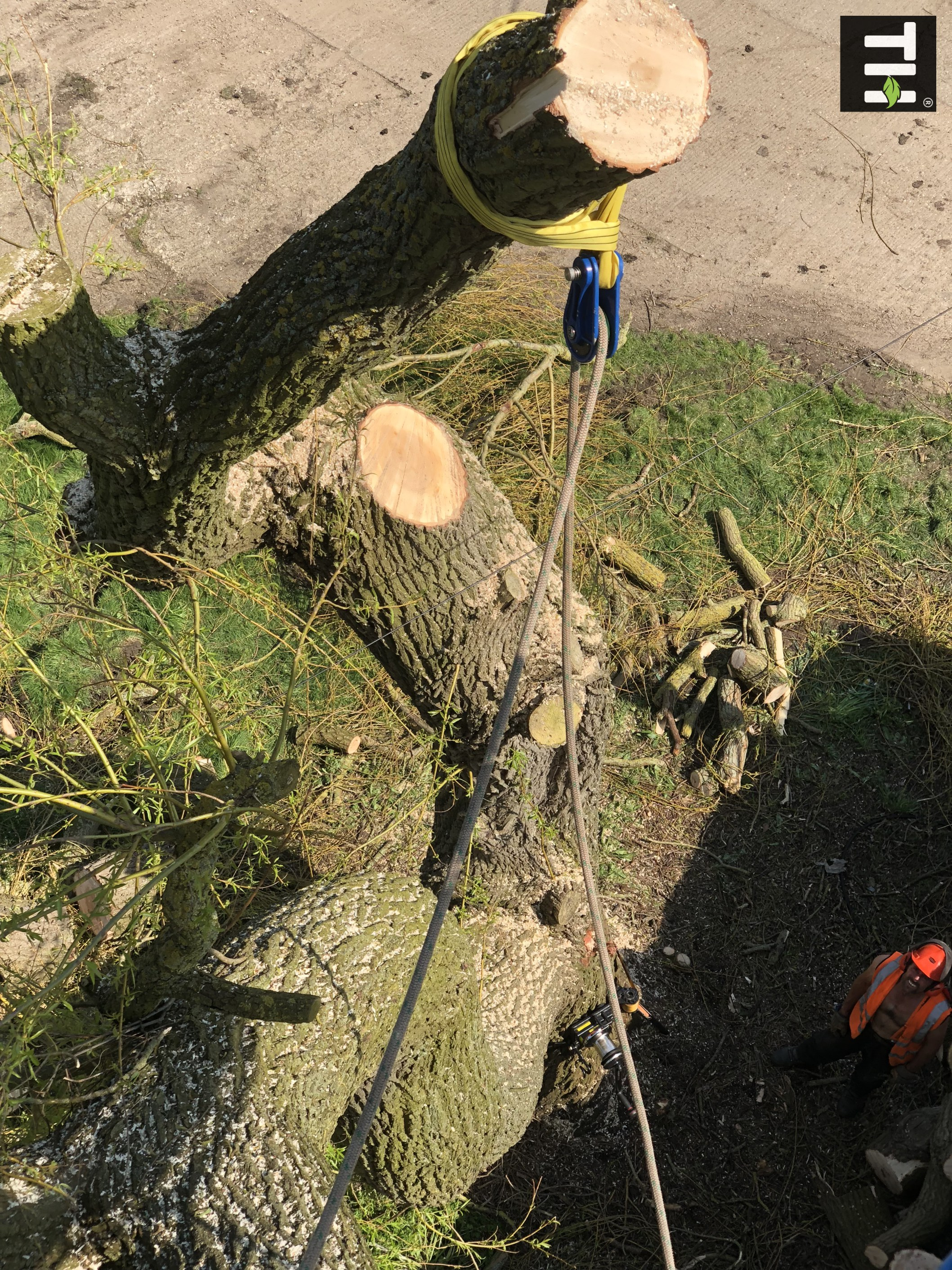 Expert Tree Surgeon In Essex (26)