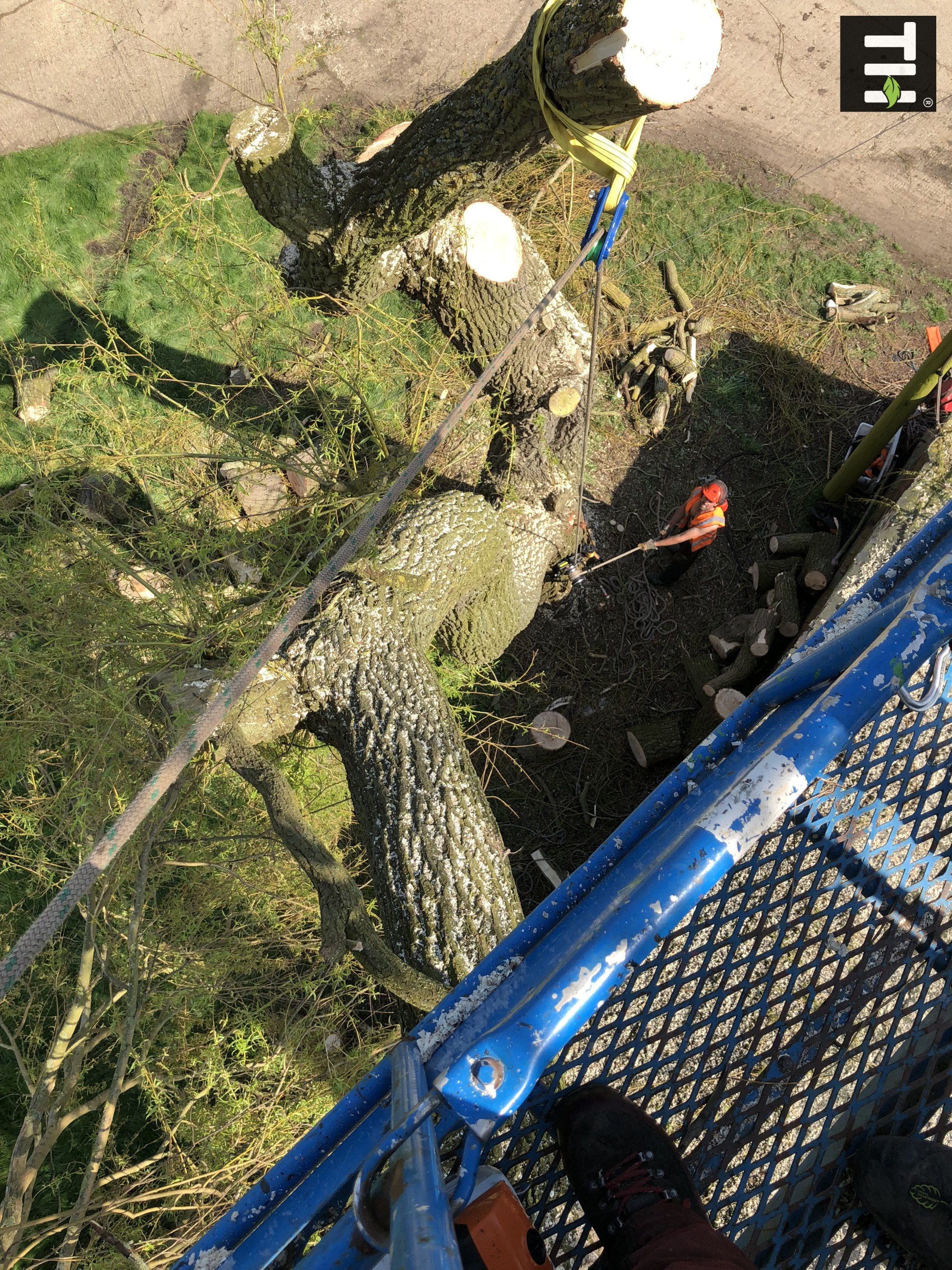 Expert Tree Surgeon In Essex (27)