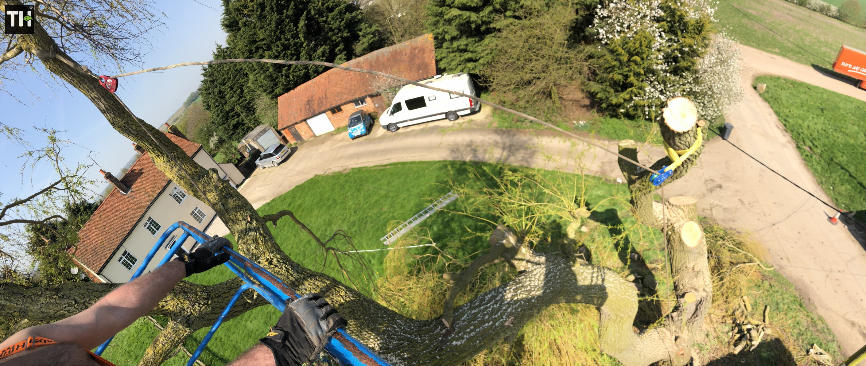 Expert Tree Surgeon In Essex (28)