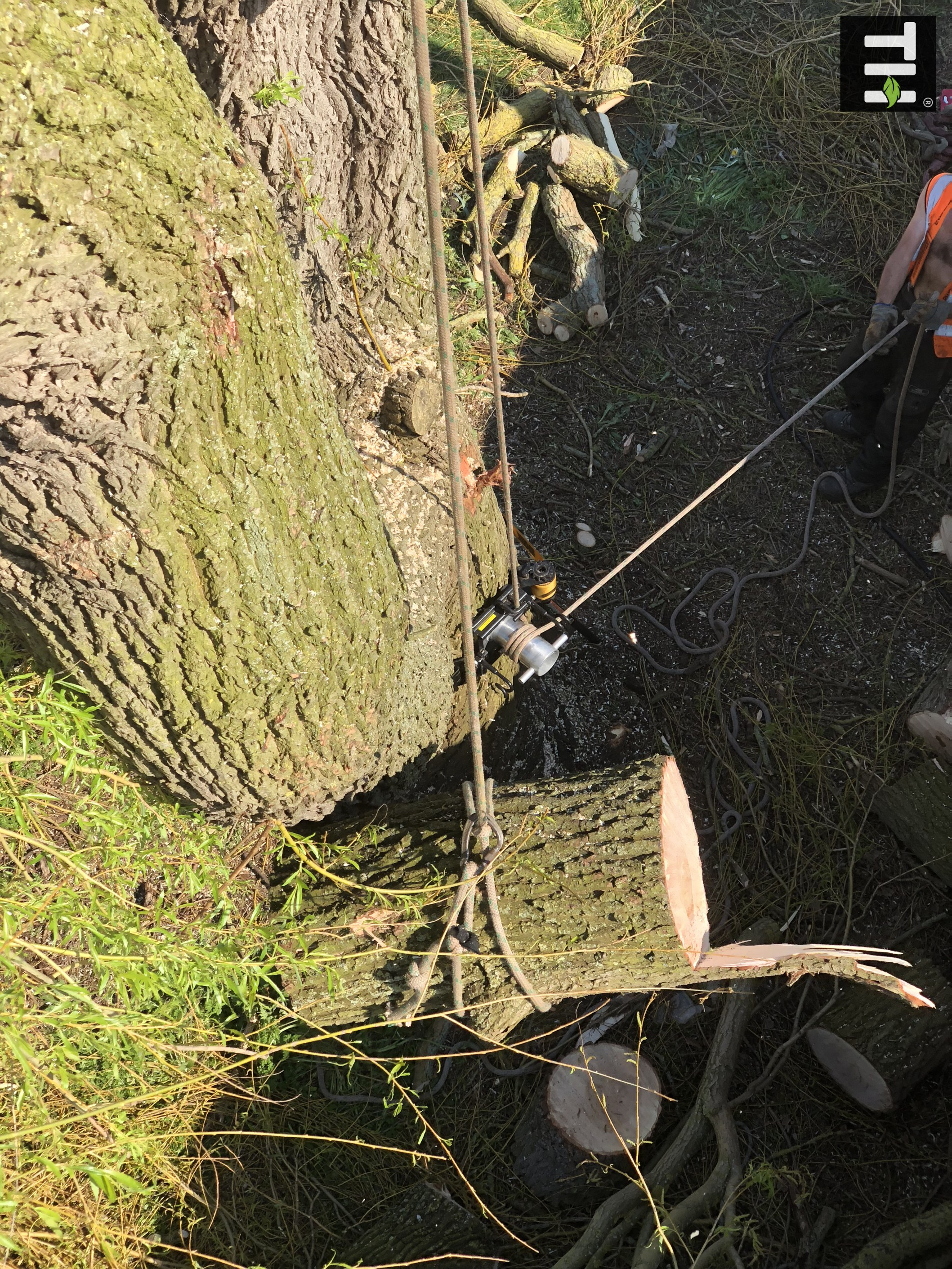 Expert Tree Surgeon In Essex (29)