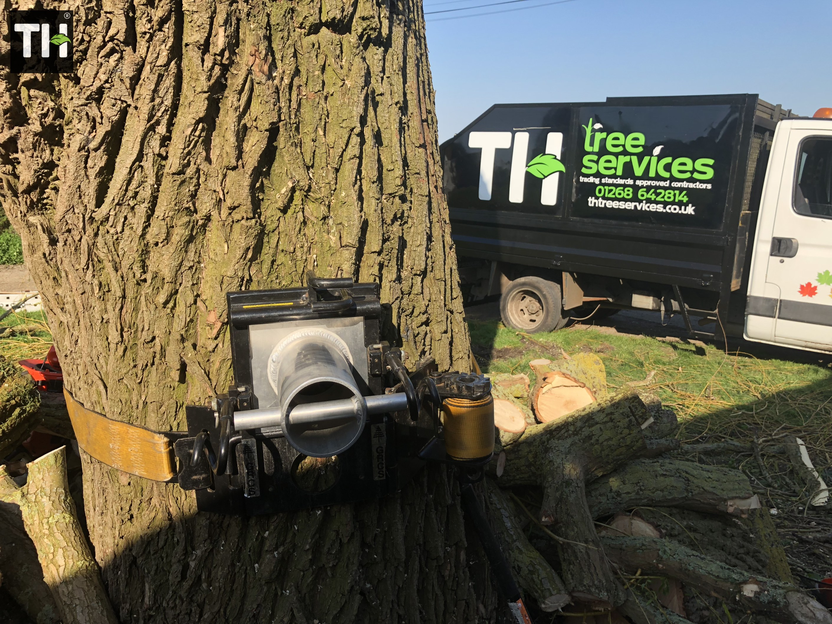 Expert Tree Surgeon In Essex (31)