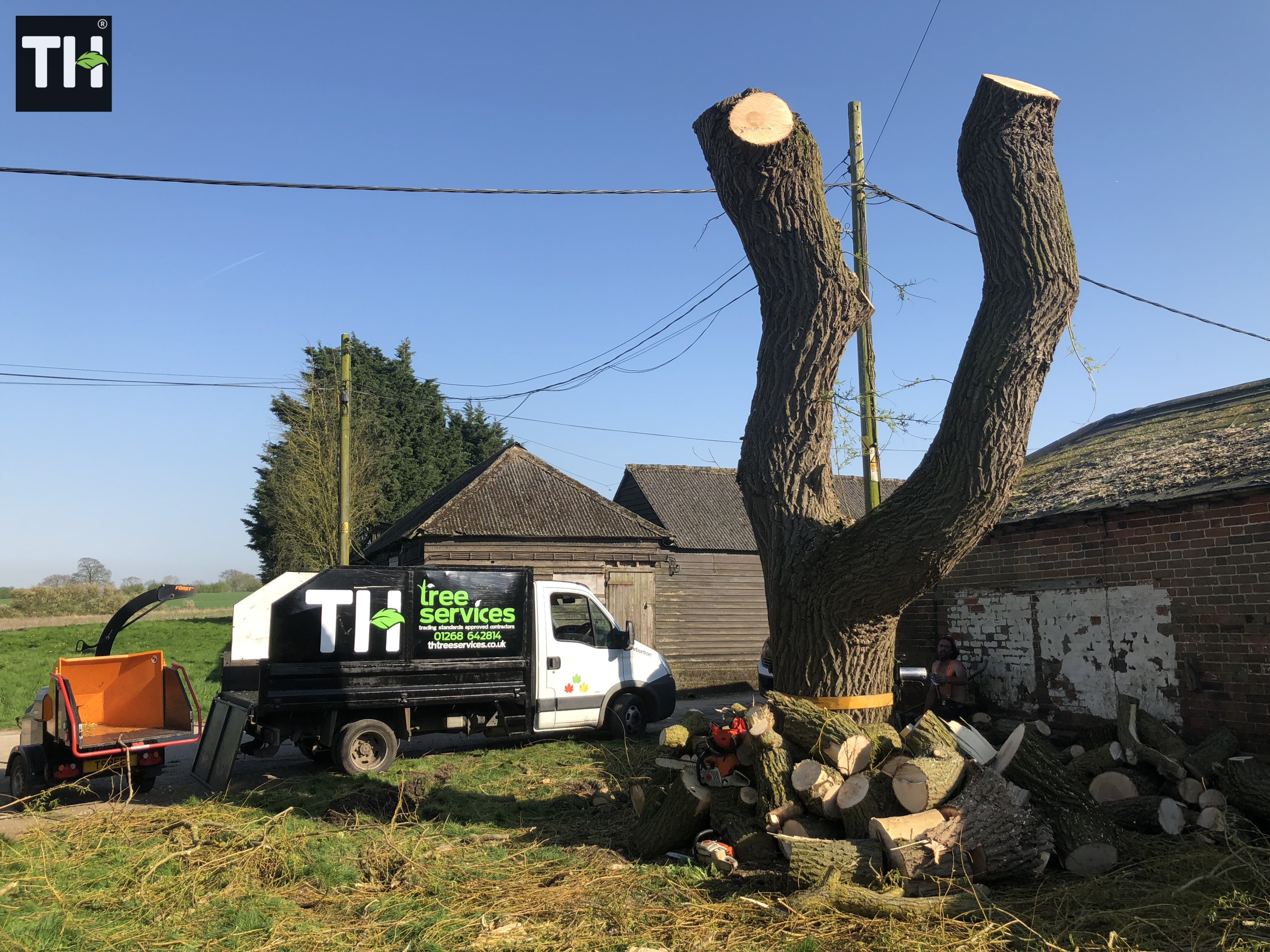 Expert Tree Surgeon In Essex (32)