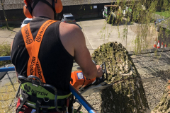 Expert Tree Surgeon In Essex (17)
