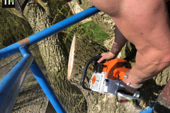 Expert Tree Surgeon In Essex (19)