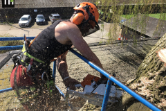 Expert Tree Surgeon In Essex (20)