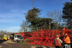 Tree pruning with a crane in stanford le hope (6)