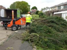 Tree service Essex