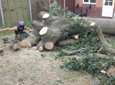 oak tree removal wickford