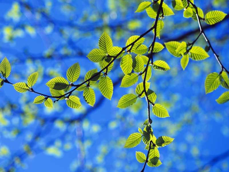 When Is The Best Time To Prune A Silver Birch Tree