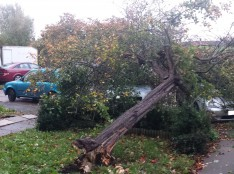 Fallen tree in Essex