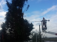 specialist tree removal essex
