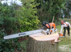 Tree removal Rochford
