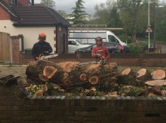 Tree Felling Wickford