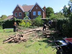 Upminster Tree Felling & Tree Removal