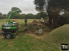 Felling Conifer Trees In Rayleigh