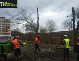 Southend tree fella, T.H Tree Services