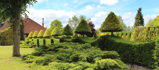 When Is The Best Time To Prune My Yew Tree Tree Surgeons Essex